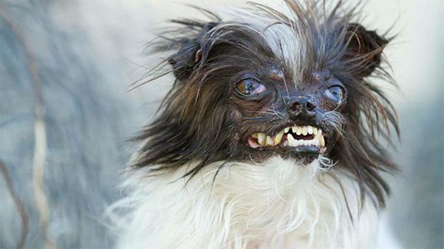 world ugly dog 1