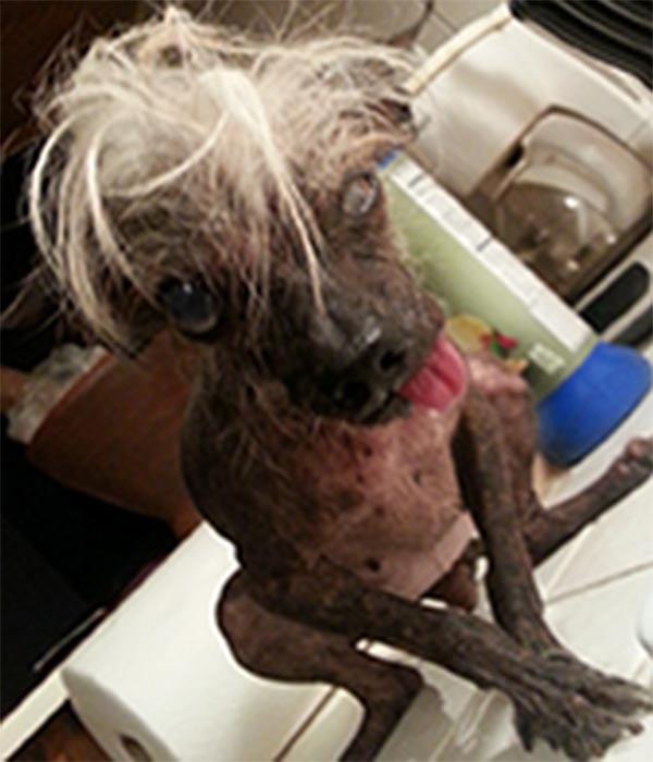 world ugly dog 3