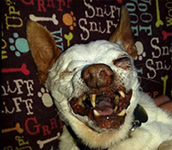 world ugly dog 4